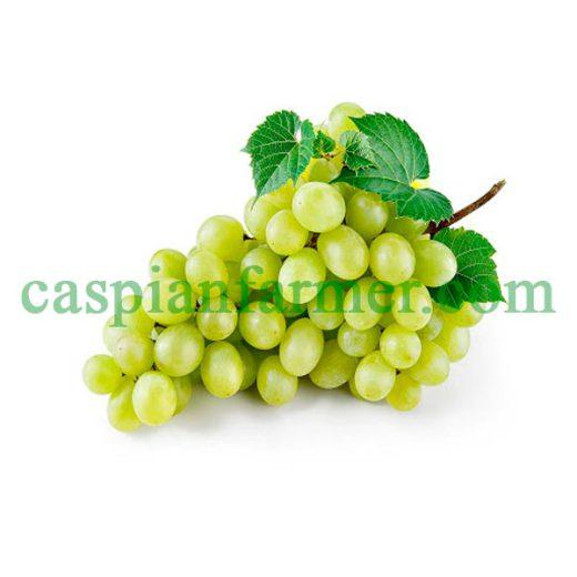 نهال انگور عسگری سفید