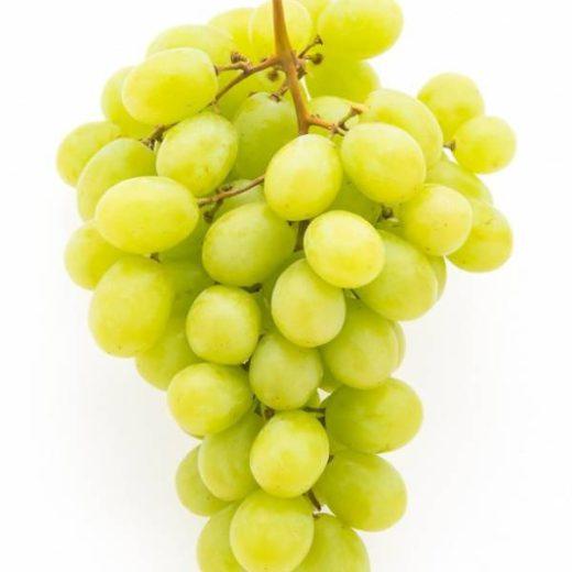 نهال انگور یاقوتی سفید