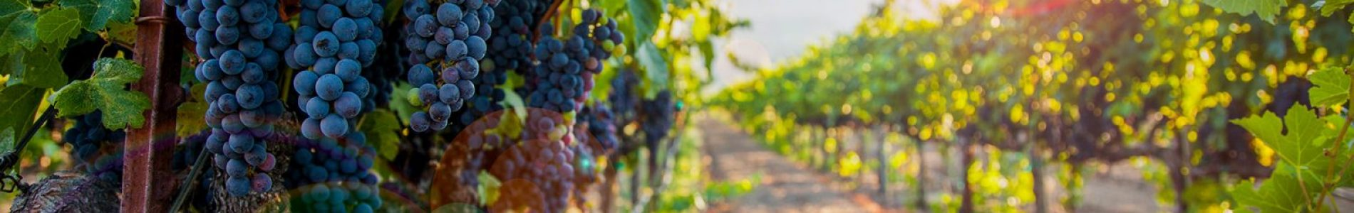grape_vineyard_image-e1591885122590